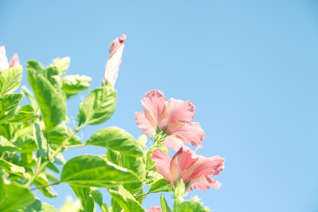 okinawa-image